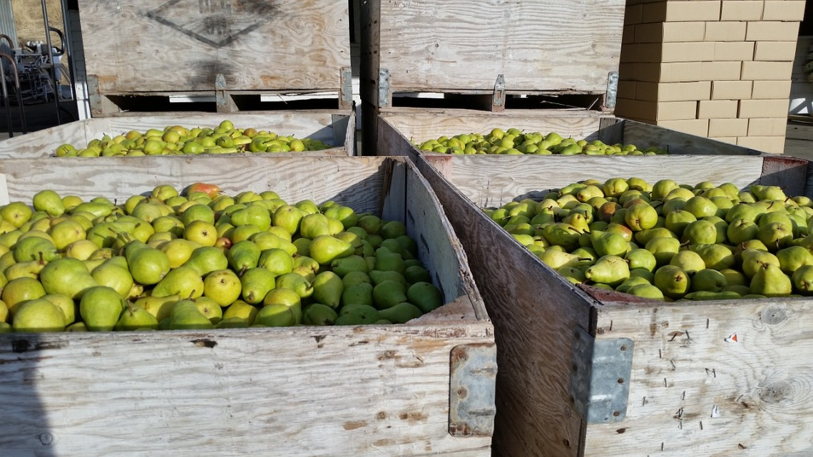 crates of pears