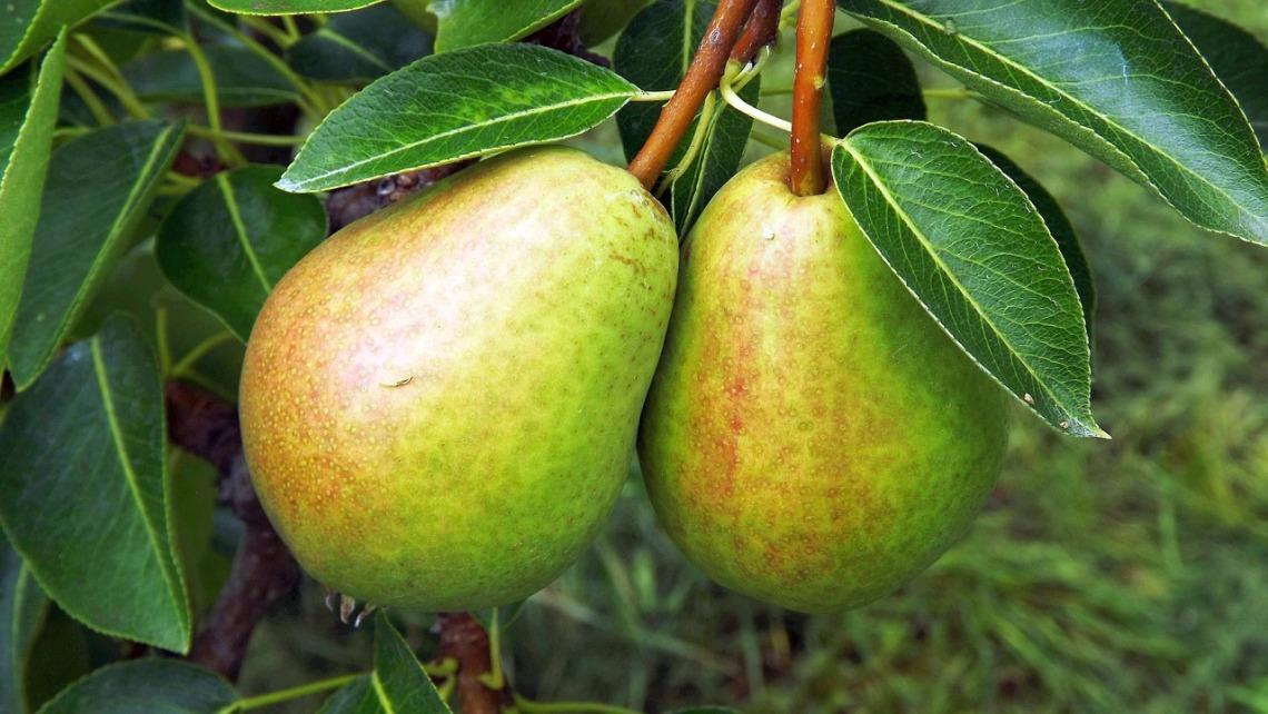 fruit-2644838_1280.jpg
